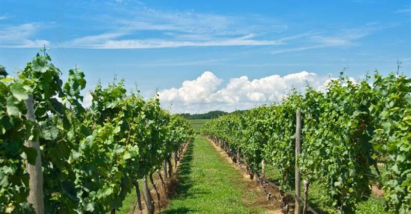 Peller Estates Winery Restaurant | Niagara on the Lake