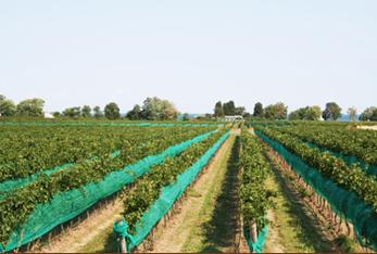 Atlantis Niagara Wines