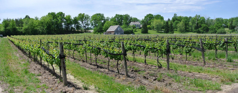 Five Rows Craft Wine Of Lowrey Vineyards Niagara Wineries