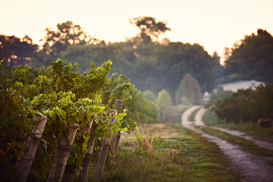 Lailey Vineyards Niagara On The Lake Wineries