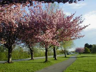 Niagara Parkway: The way to King's Bridge Park