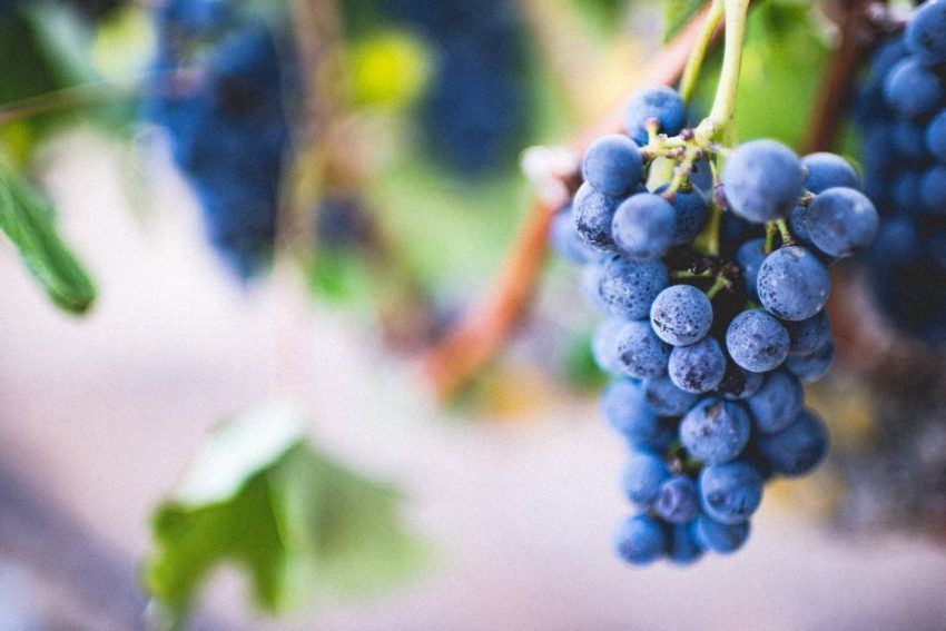 Wine Glossary & Grape Types for Beginners