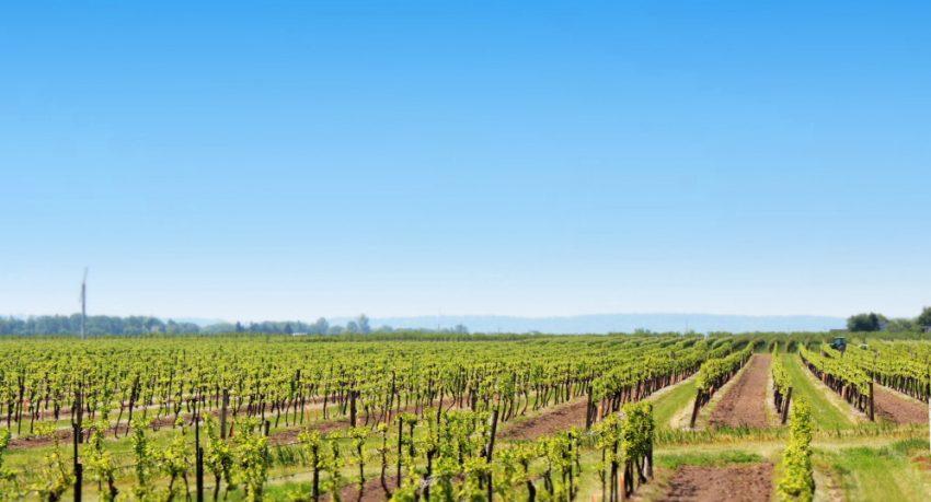 wine country niagara
