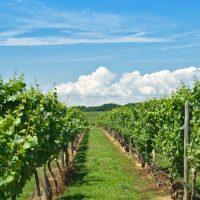 niagara on the lake wine tours