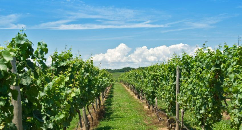 niagara on the lake wine tours