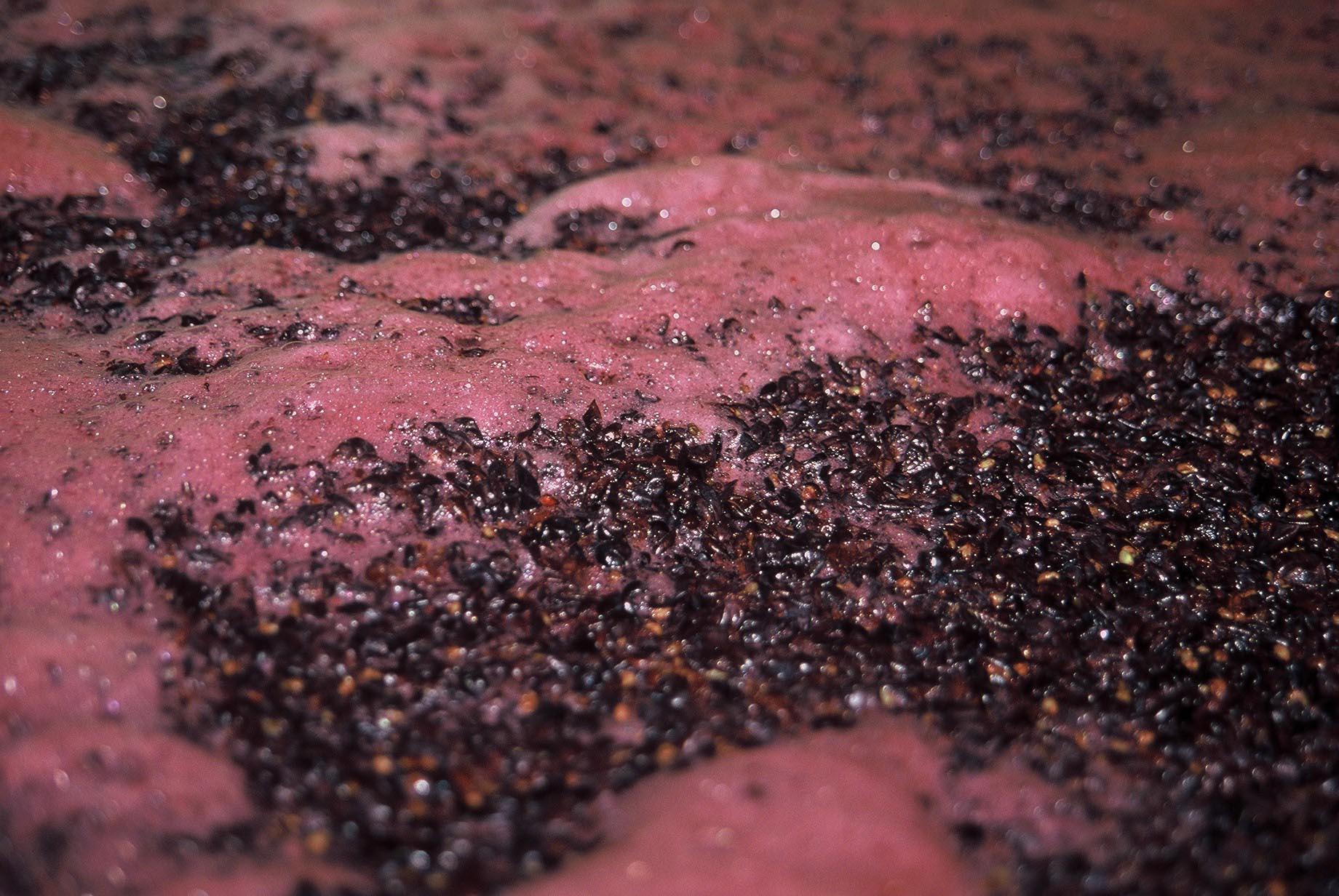 yeast in wine making
