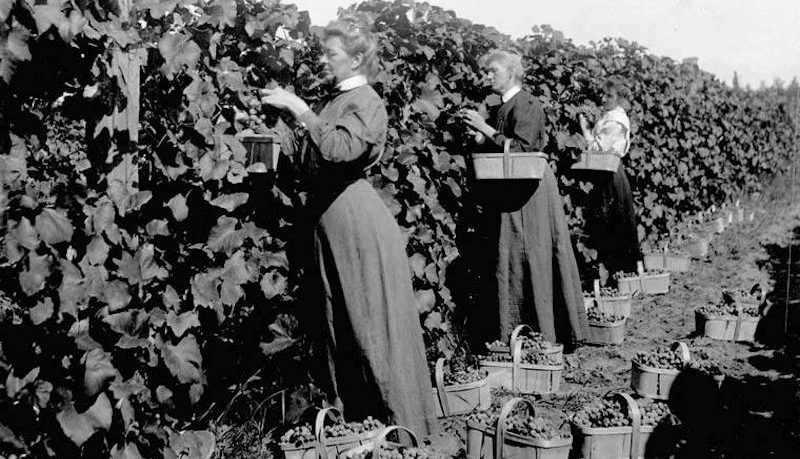 history of wine making in canada