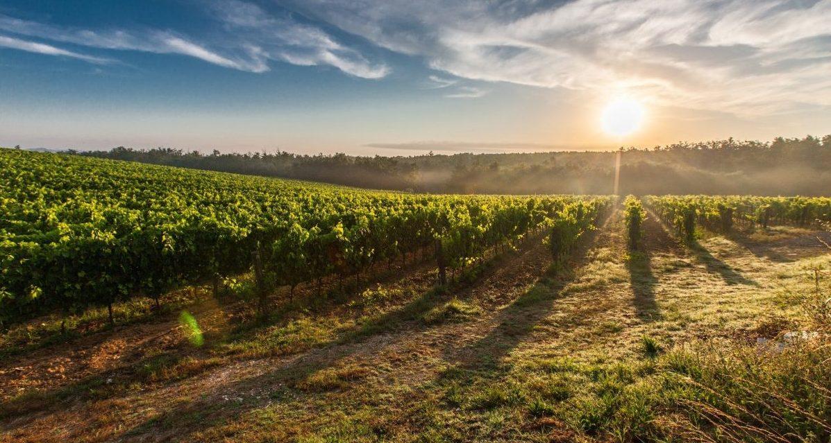 niagara winery