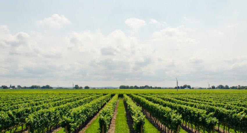 wine growing regions of ontario