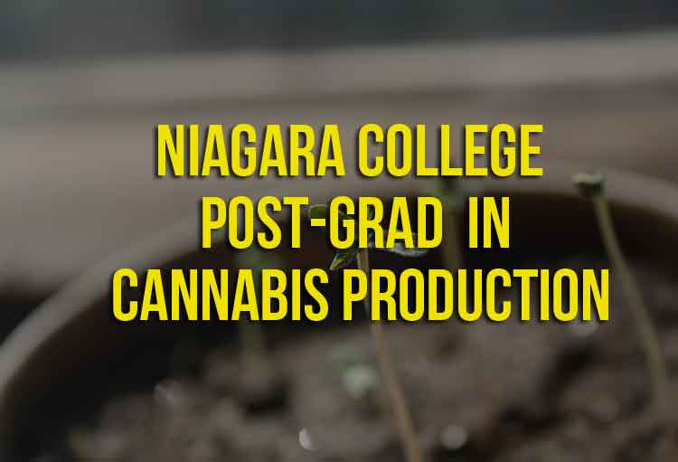 Niagara College Post-Grad in Cannabis Production