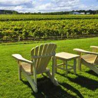 Must Visit Niagara Wineries
