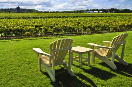 Must Visit Wineries in Niagara